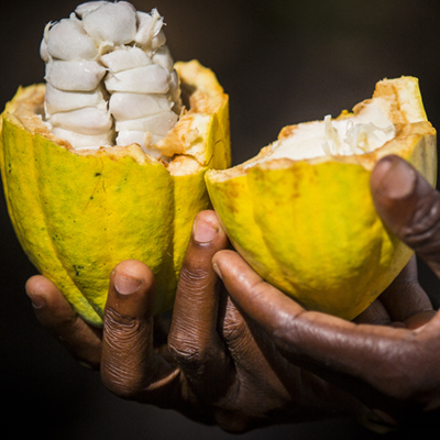 CEMOI takes part to the 2017 World Cocoa Day in Paris