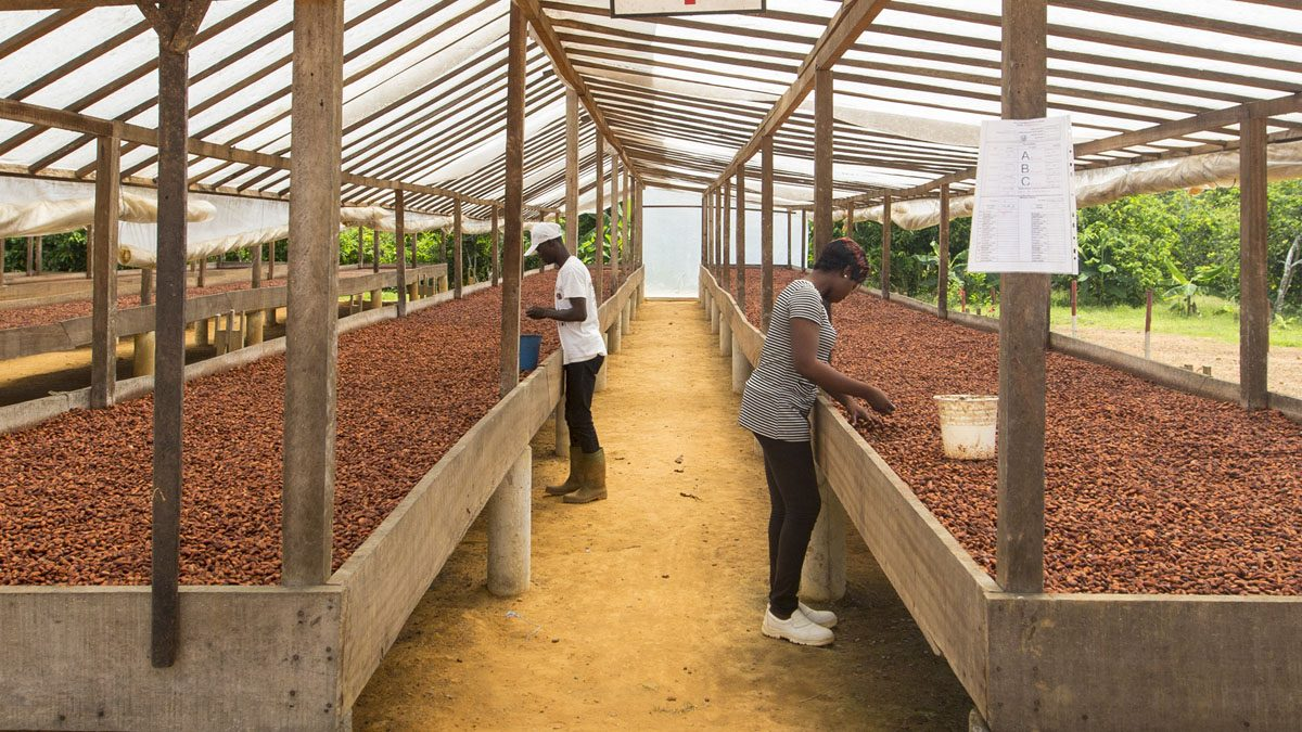 TRANSPARENCE CACAO, FIRST FIELD REPORT